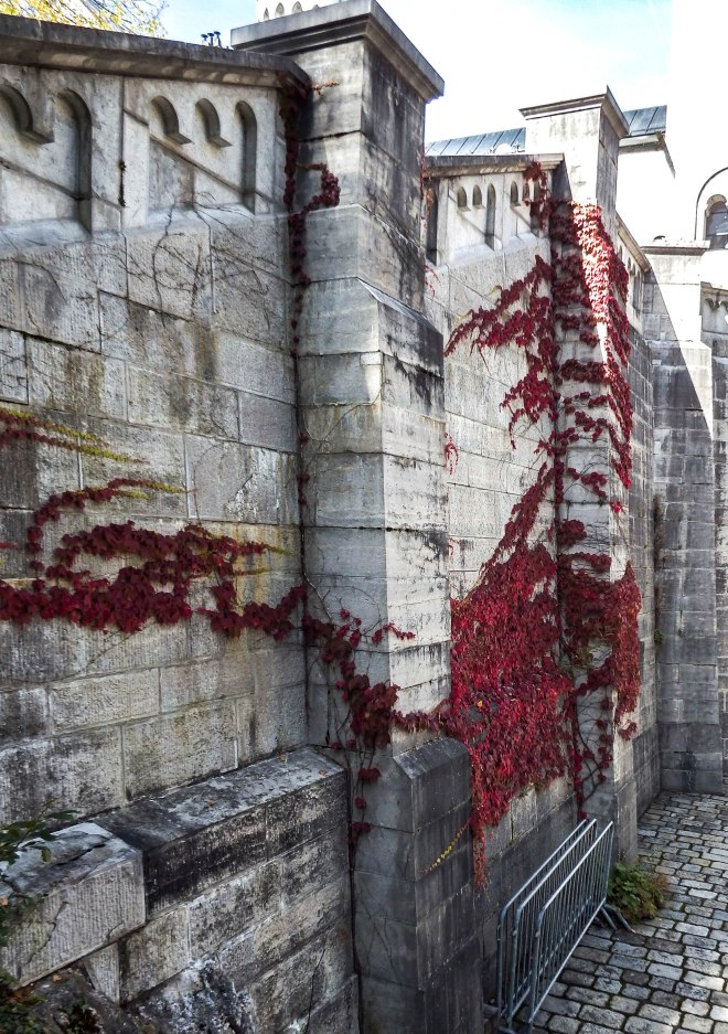 Red vines on the wall of Neuschwanstein Castle